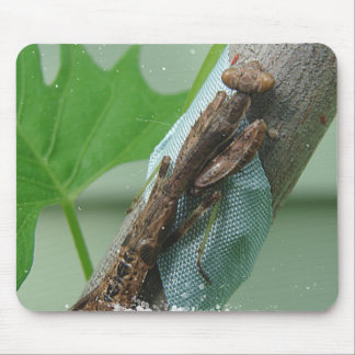 Praying Mantis Insect Mouse Pads