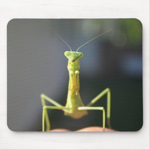 Praying Mantis Mousepads