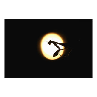 Praying Mantis Silhouette Photographic Print