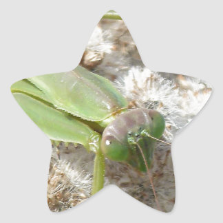 praying mantis star sticker