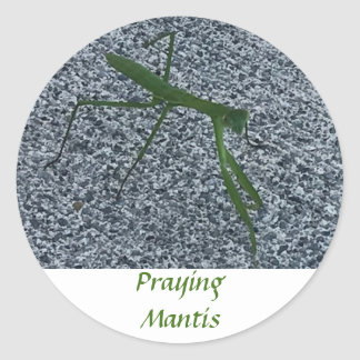 Praying Mantis Walking on Sidewalk Insect Stickers