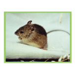 Prebles Meadow Jumping Mouse Post Card