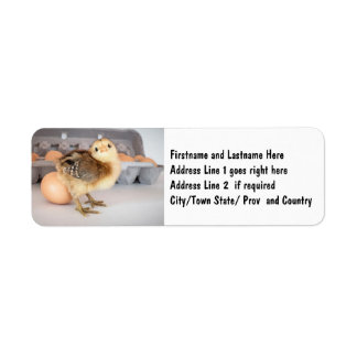 Precious Baby Chick and Eggs Return Address Label
