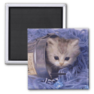 Precious Cat and Kitten Photo Cards, Gifts, Postag Square Magnet