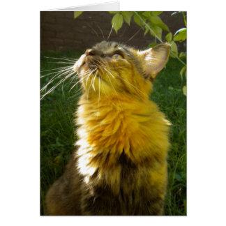Precious Kitty All Occasion (blank) Card