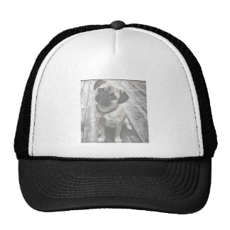 Precious Pug Puppy in Black and White Mesh Hats