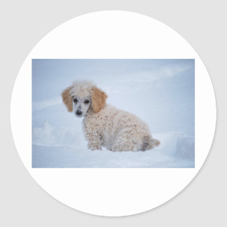 Precious White Poodle Puppy in Snow Round Sticker