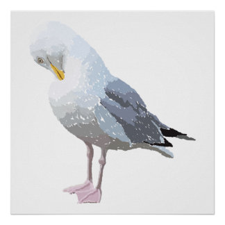 Preening Gull. Posters