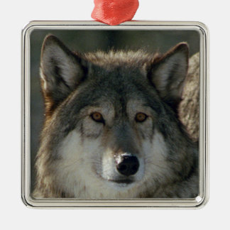 "Premium Square Ornament ""Lamar-Alpha wolf"""