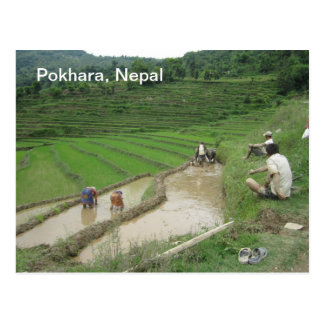 Preparing the Rice Paddies for Planting Postcard