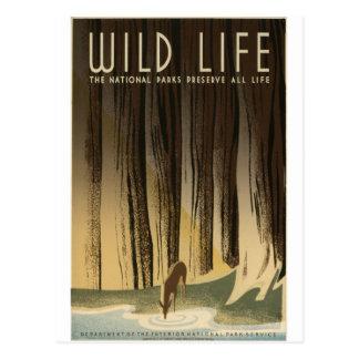 Preserve Wildlife Postcard