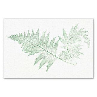 Pressed Fern Leaves Tissue Paper