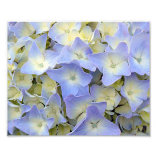 Pretty and Colorful Light Blue Hydrangea Flowers Photo Print