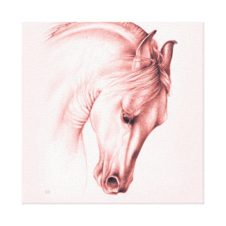 Pretty Andalusian Horse Canvas Print