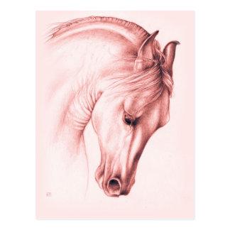 Pretty Andalusian Horse Postcard