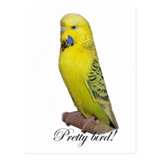 Pretty Bird postcard
