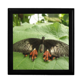 Pretty Black Red and Gold Butterfly Gift Box