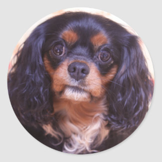 Pretty Black & Tan Cavalier King Charles Sticker