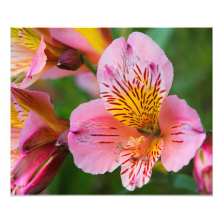 Pretty Blooms Photo Print