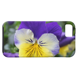 pretty blue and yellow pansy flower iPhone 5 cases