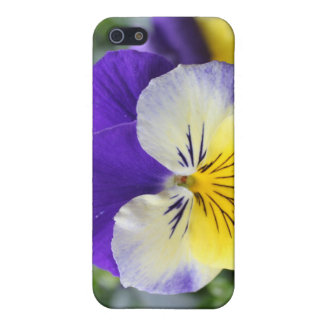 pretty blue and yellow pansy flower iPhone 5/5S cases