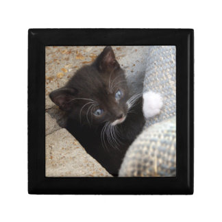 PRETTY BLUE-EYED KITTY SMALL SQUARE GIFT BOX