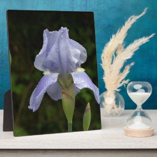 Pretty Blue Iris Floral Raindrops EASEL Plaque