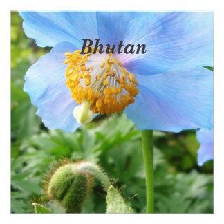 Pretty Blue Poppy Invites