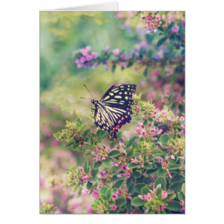 Pretty Butterfly Orange White Black Pink Flowers Greeting Card