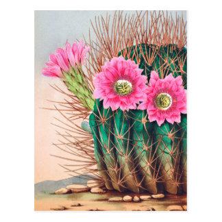 pretty cactus postcard