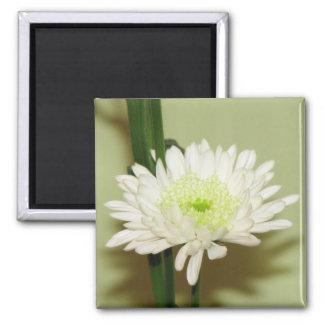 Pretty Chrysanthemum Magnet