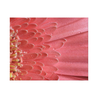Pretty Coral Pink Gerbera Daisy Canvas Print