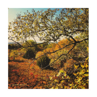 Pretty Country Autumn Trees and Woods Artphoto Wood Canvas