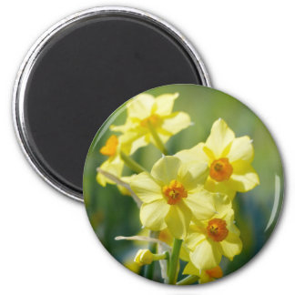 Pretty Daffodils, Narcissus 03.1 6 Cm Round Magnet