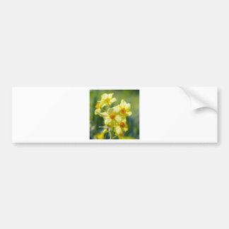 Pretty Daffodils, Narcissus 03.1 Bumper Sticker