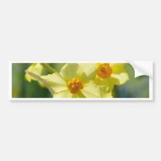 Pretty Daffodils, Narcissus 03.1 Bumper Sticker