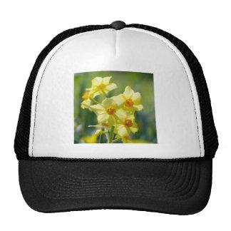 Pretty Daffodils, Narcissus 03.1 Cap