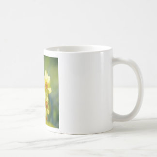 Pretty Daffodils, Narcissus 03.1 Coffee Mug