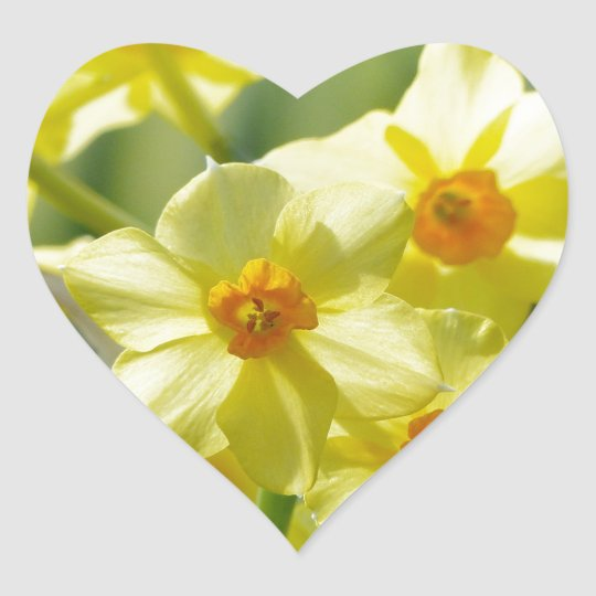 Pretty Daffodils, Narcissus 03.1 Heart Sticker