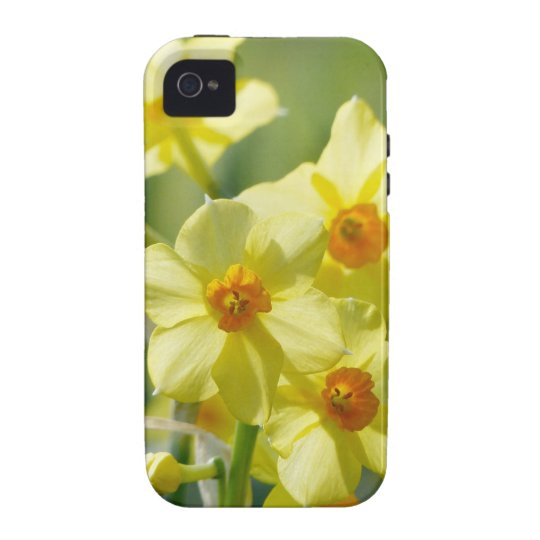 Pretty Daffodils, Narcissus 03.1 iPhone 4/4S Cover