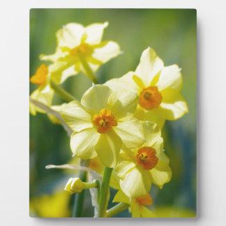 Pretty Daffodils, Narcissus 03.1 Plaque