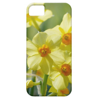Pretty Daffodils, Narcissus 03.2_rd Barely There iPhone 5 Case