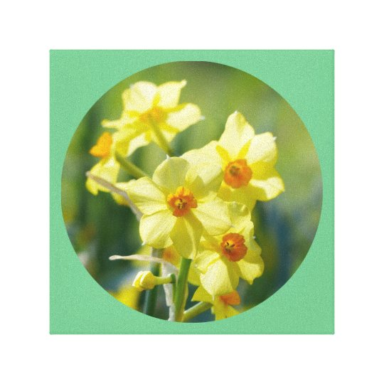 Pretty Daffodils, Narcissus 03.2_rd Canvas Print