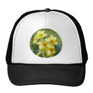 Pretty Daffodils, Narcissus 03.2_rd Cap