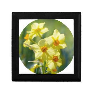 Pretty Daffodils, Narcissus 03.2_rd Gift Box