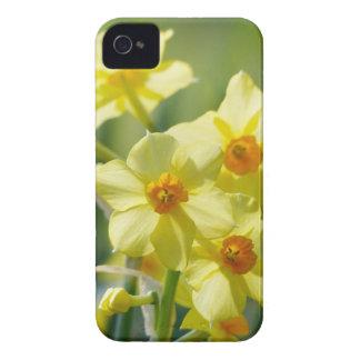 Pretty Daffodils, Narcissus 03.2_rd iPhone 4 Case-Mate Case
