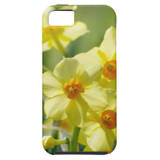Pretty Daffodils, Narcissus 03.2_rd iPhone 5 Case