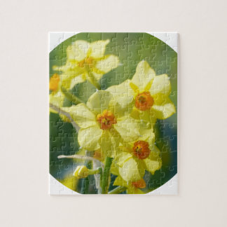 Pretty Daffodils, Narcissus 03.2_rd Jigsaw Puzzle