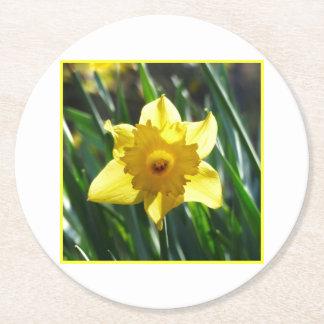 Pretty Daffodils, Narcissus 03.3 Round Paper Coaster