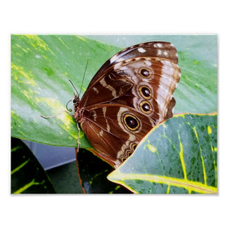 pretty eye butterfly moth brown tan bug nature poster